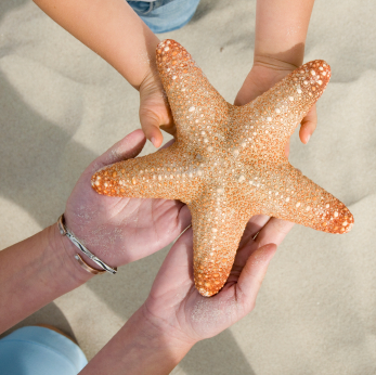 Just One Starfish Mentor Application