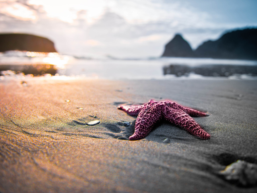 The beginning of Just One Starfish